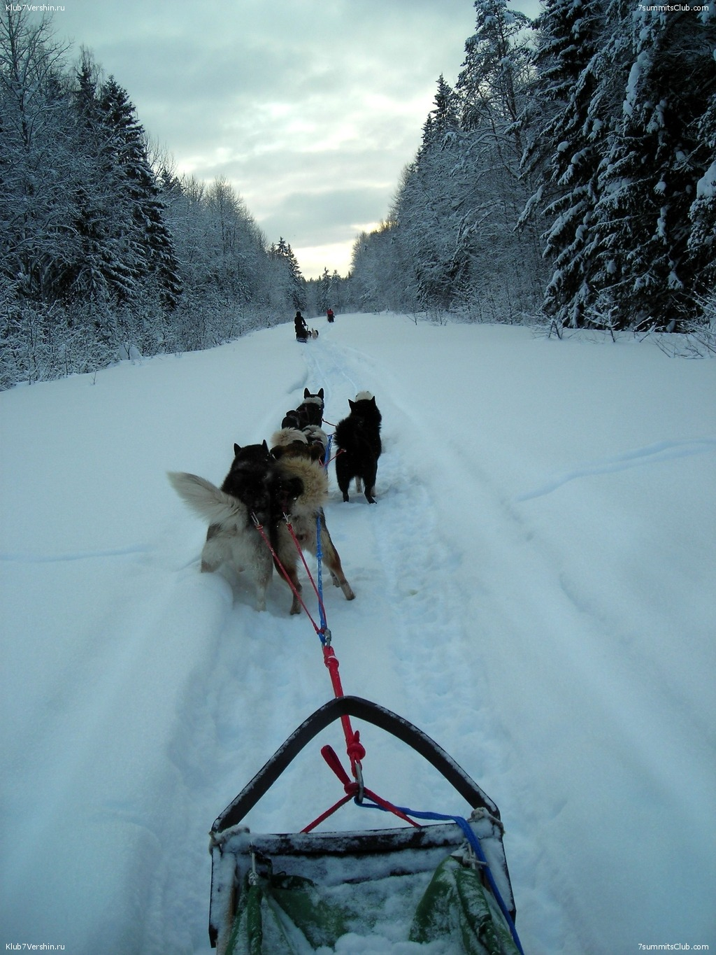 Karelia. Sled Dogs Weekend, photo 52