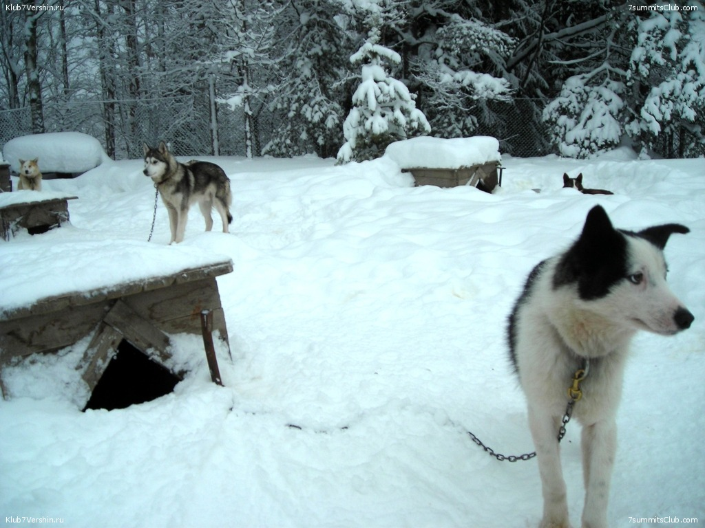 Karelia. Sled Dogs Weekend, photo 3