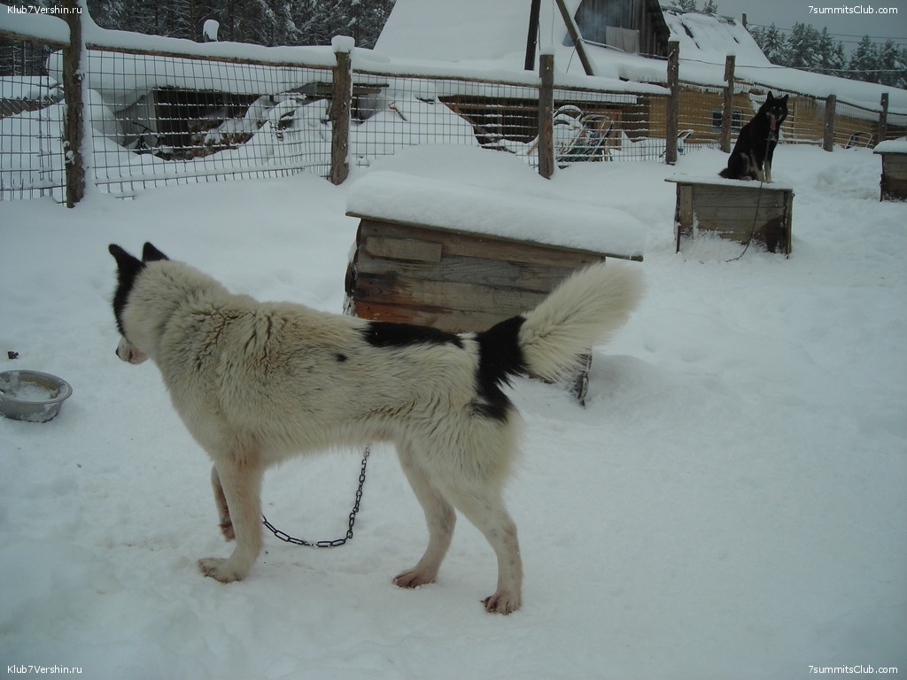 Karelia. Sled Dogs Weekend, photo 5