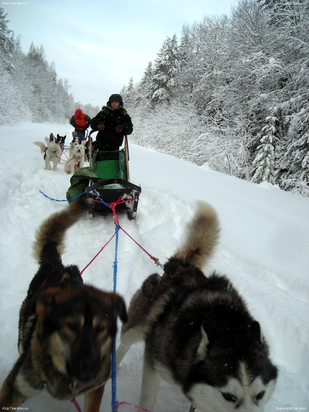 Karelia. Sled Dogs Weekend, photo 53