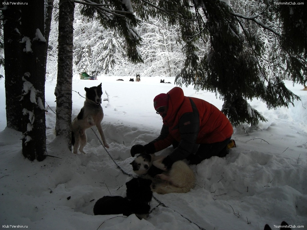 Karelia. Sled Dogs Weekend, photo 11
