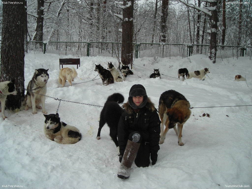 Karelia. Sled Dogs Weekend, photo 12