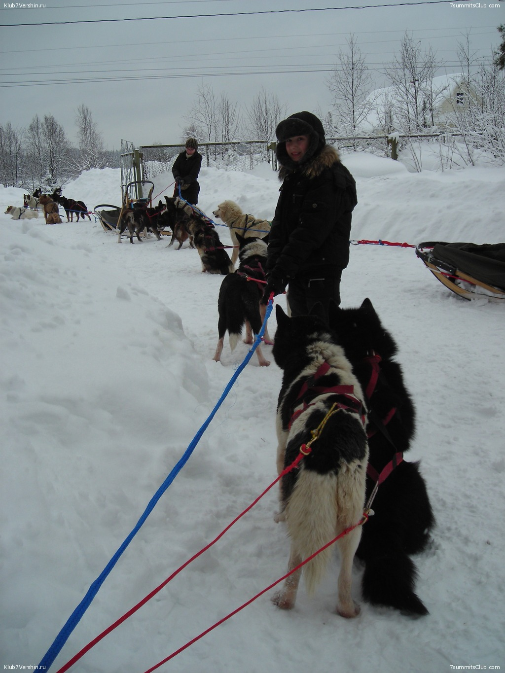 Karelia. Sled Dogs Weekend, photo 55