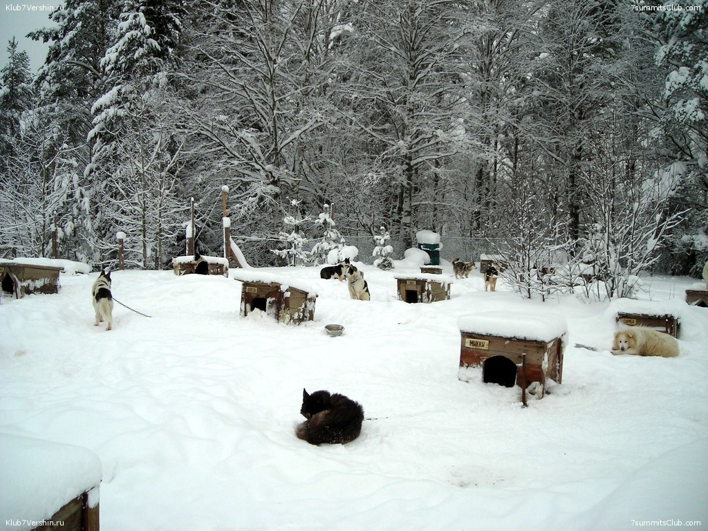 Karelia. Sled Dogs Weekend, photo 17