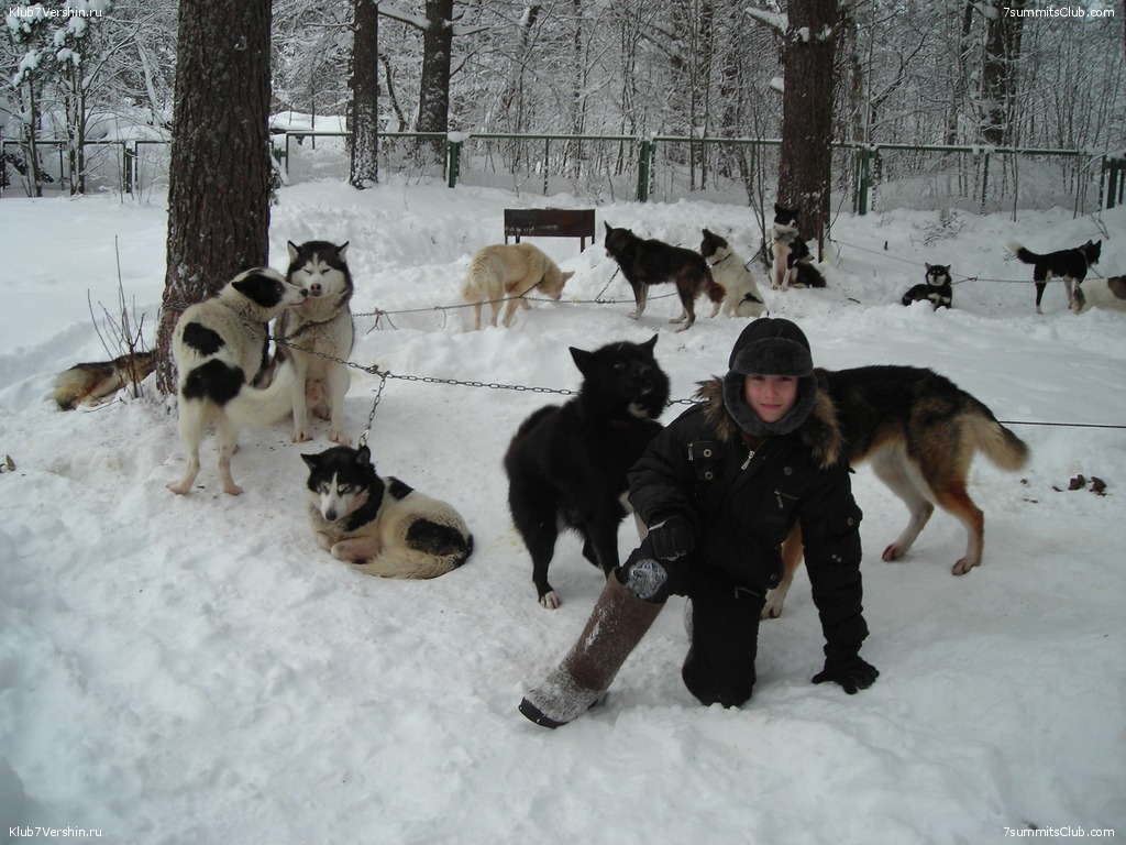 Karelia. Sled Dogs Weekend, photo 18
