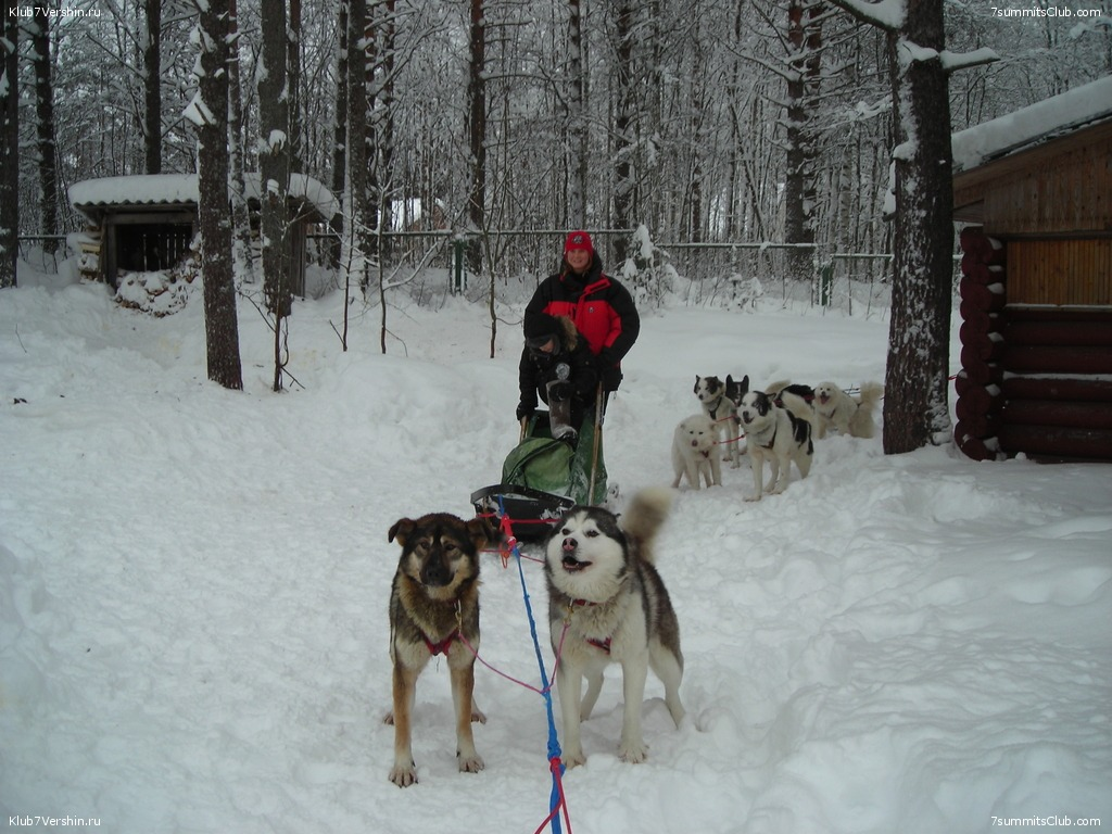 Karelia. Sled Dogs Weekend, photo 19