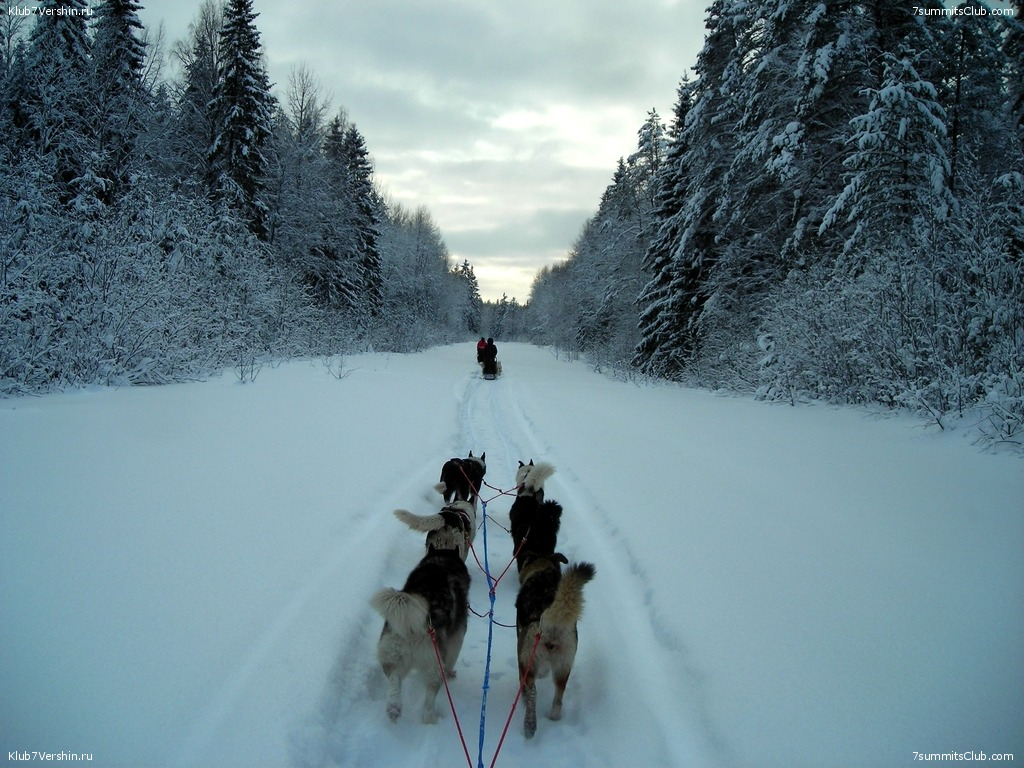Karelia. Sled Dogs Weekend, photo 24