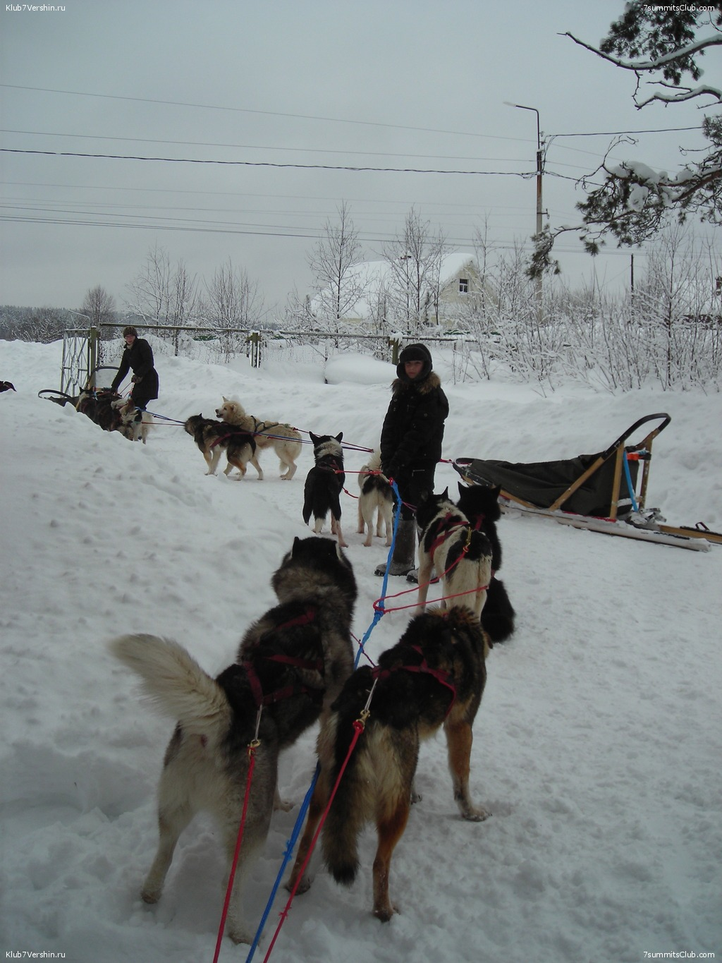 Karelia. Sled Dogs Weekend, photo 56