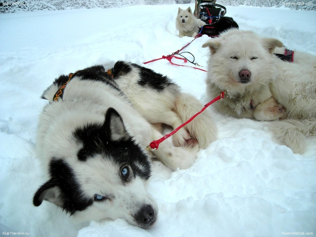 Karelia. Sled Dogs Weekend, photo 33