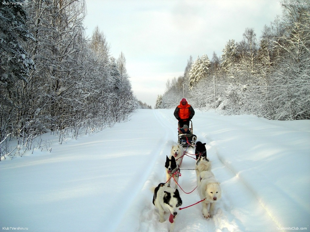 Karelia. Sled Dogs Weekend, photo 39