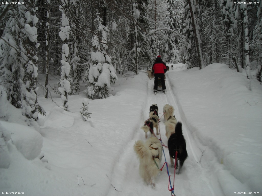 Karelia. Sled Dogs Weekend, photo 41