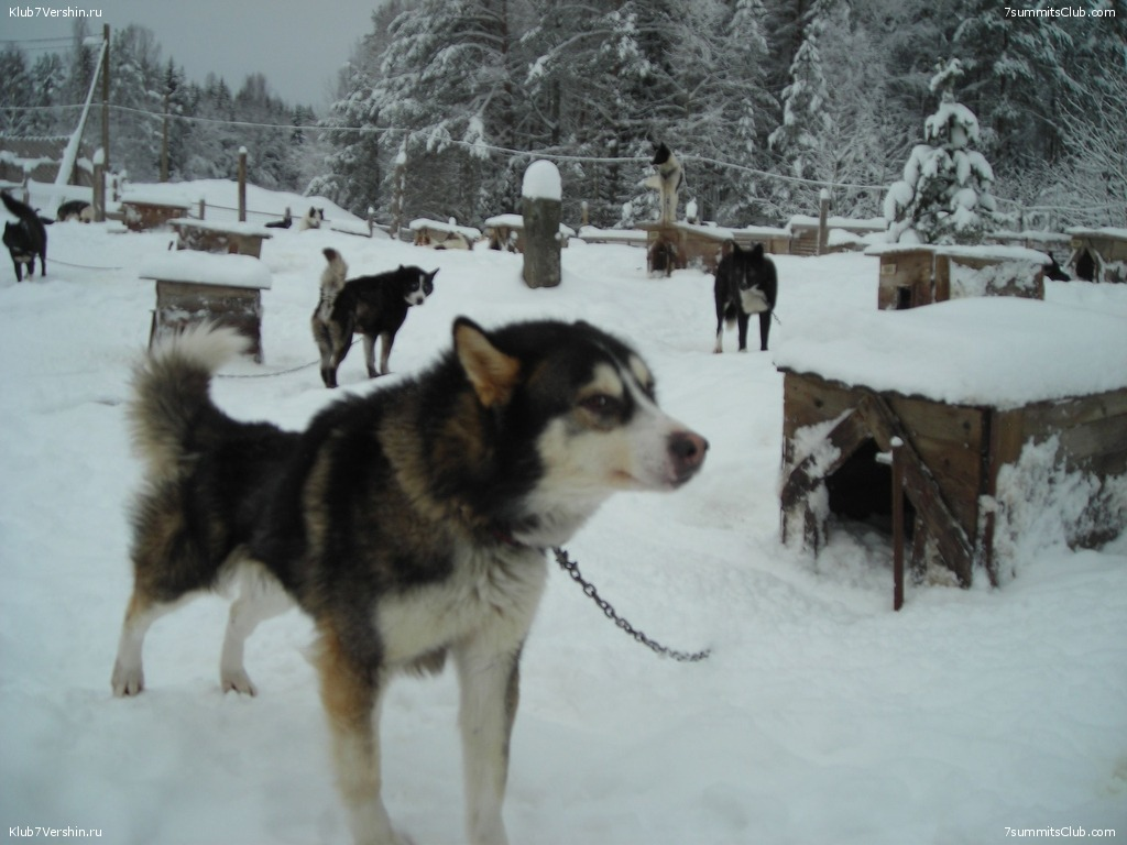 Karelia. Sled Dogs Weekend, photo 42