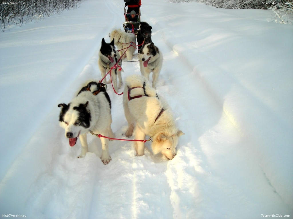Karelia. Sled Dogs Weekend, photo 43