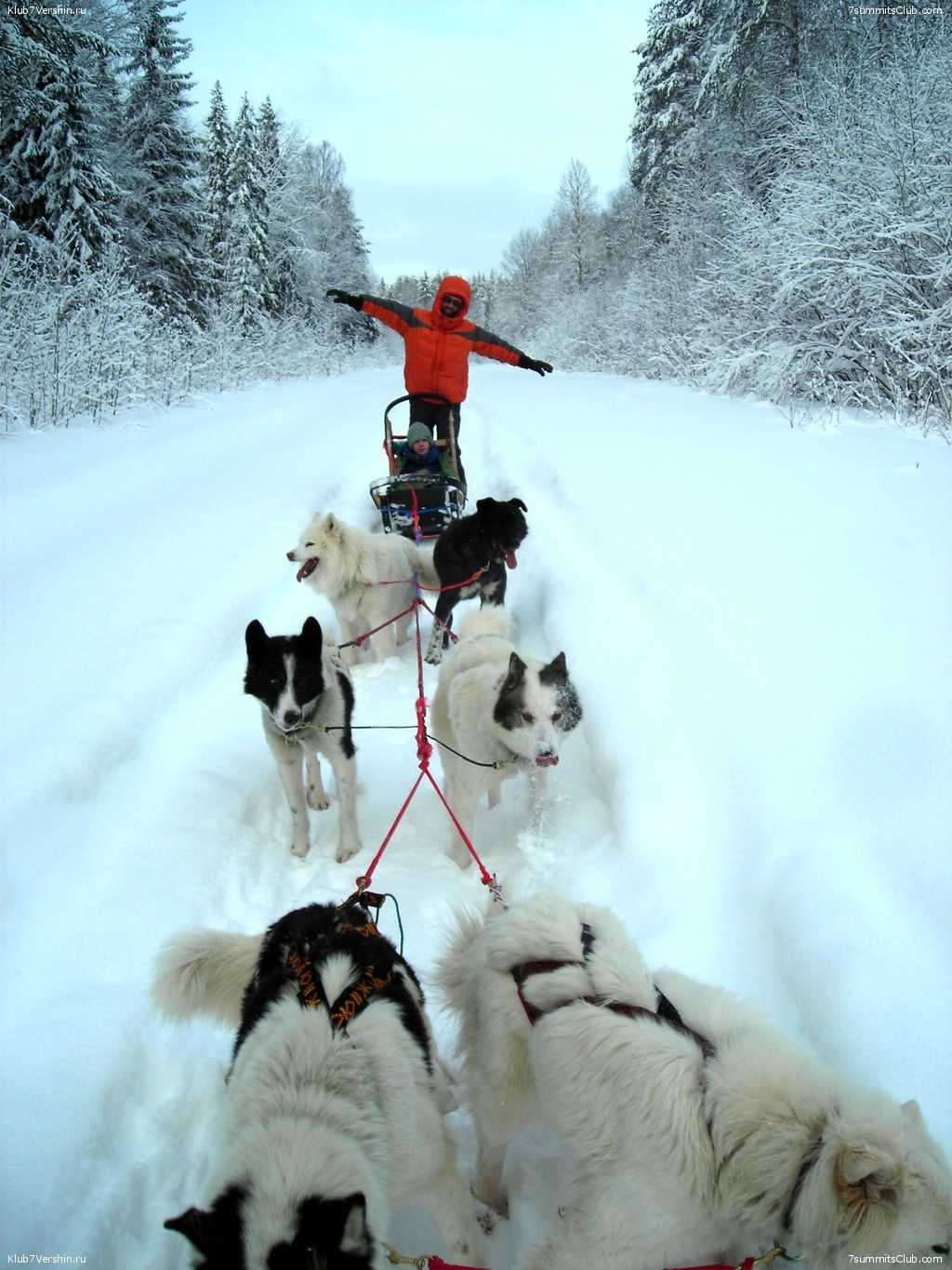 Karelia. Sled Dogs Weekend, photo 62