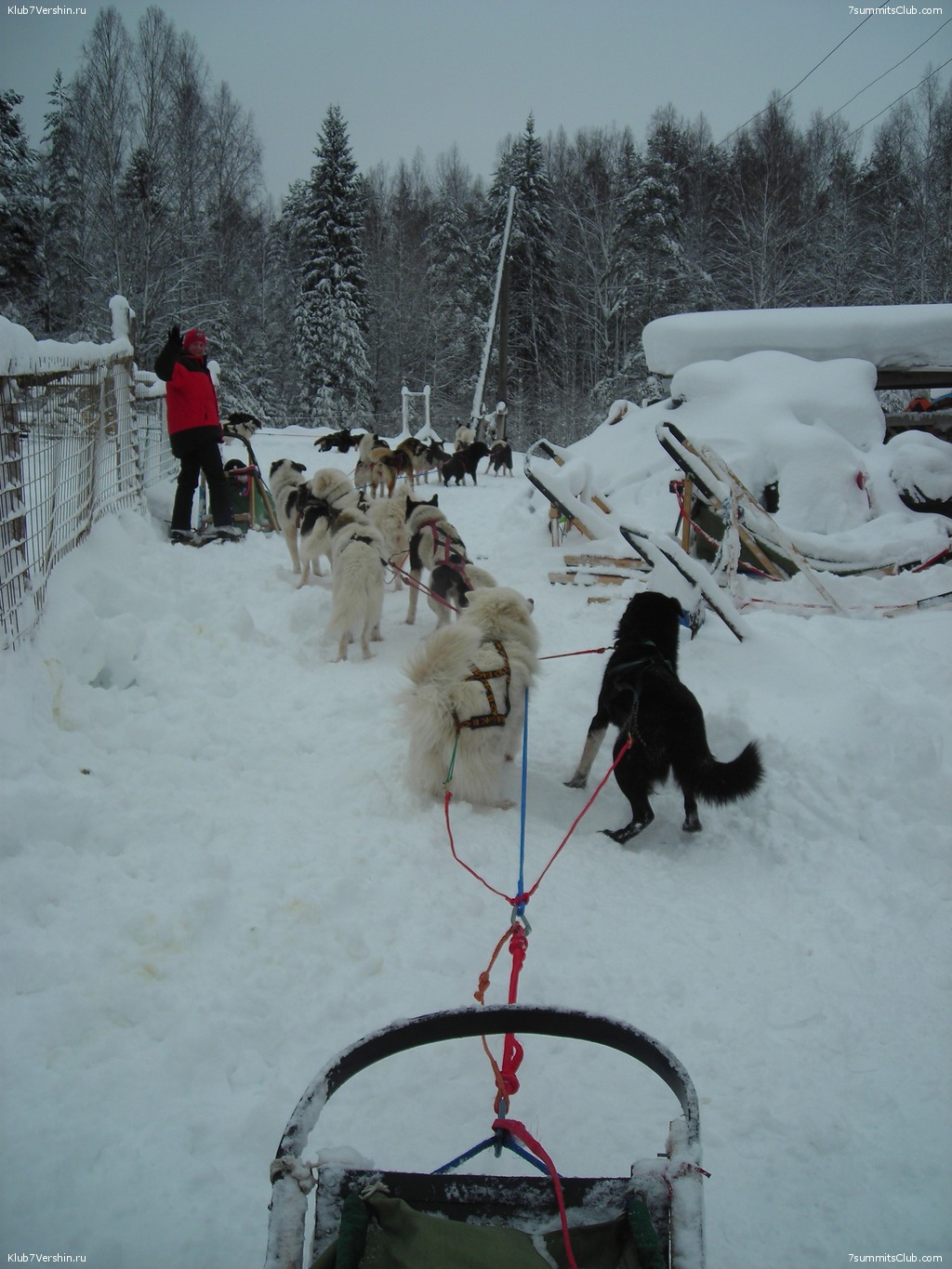 Karelia. Sled Dogs Weekend, photo 63