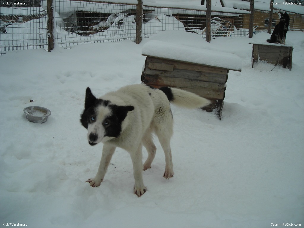 Karelia. Sled Dogs Weekend, photo 49
