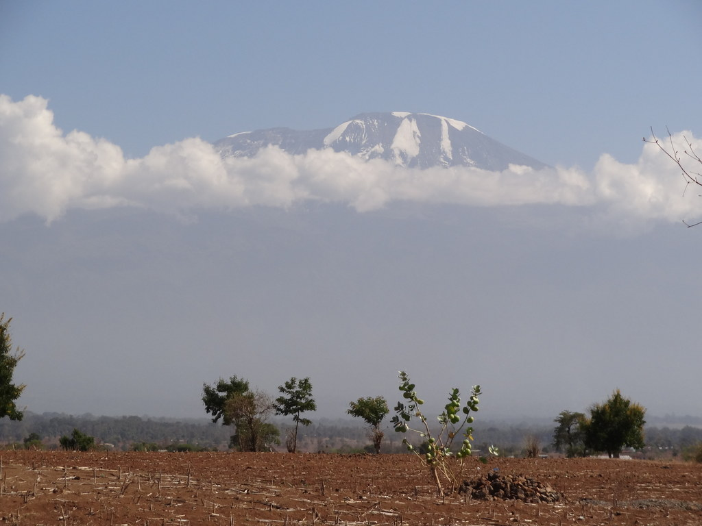 Kilimanjaro 2012. Savelyev, photo 40